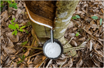 natural latex production process
